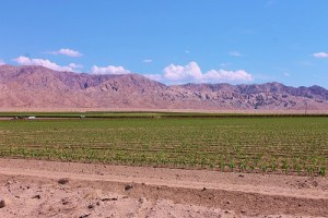 Thermal, Calif. an agricultural mecca