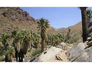 Palm Desert offers great hiking trails!