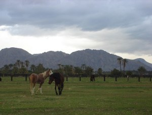 Equestrian Land in Vista Santa Rosa