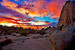 Image result for beautiful joshua tree national park