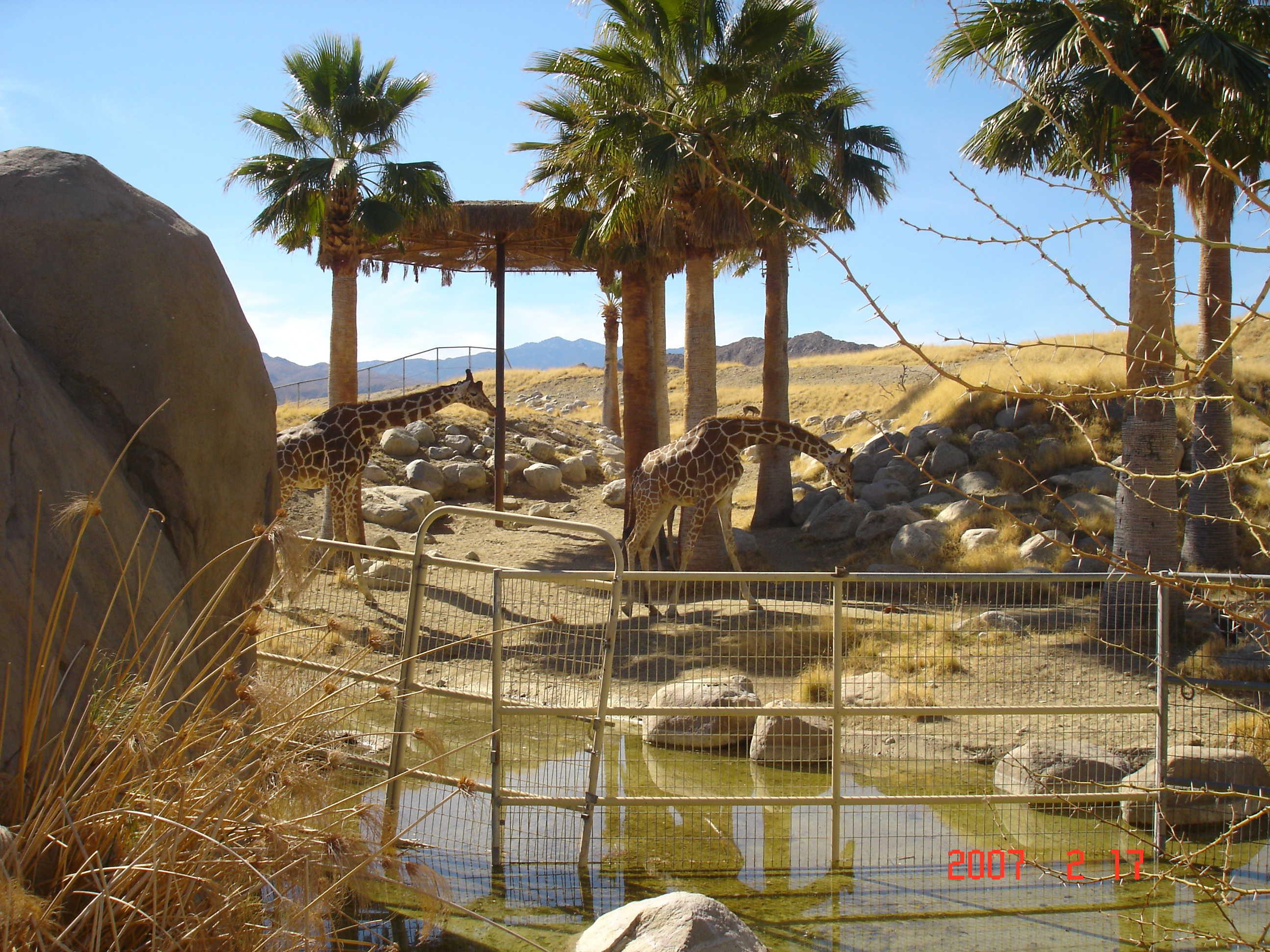The Living Desert In Palm Desert