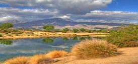 Palm Desert Real Estate