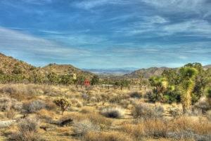 High Desert magic!