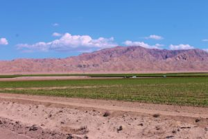 Eastern Coachella Valley offers Land & Equestrian Properties for sale