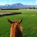 La Dolce Vita Equestrian Estate for Sale